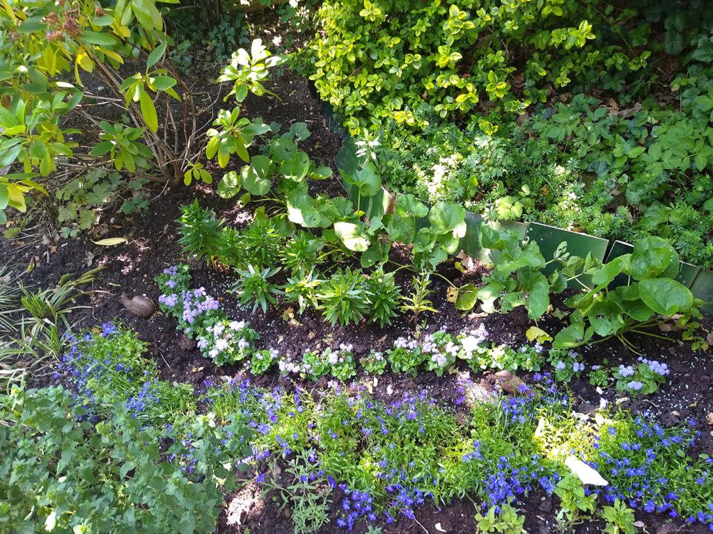 Englischer Garten im Selbstversuch